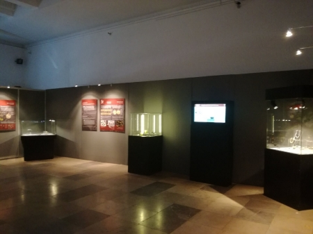 Wystawa w Państwowym Muzeum Archeologicznym w Warszawie_6